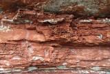 falaise aux nids d'abeilles
