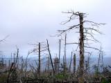 morte forêt