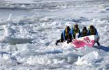dans le pack de glace