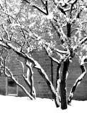 Neige en Noir & Blanc