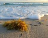 Algues sur plage