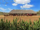 le ranch et les chevaux