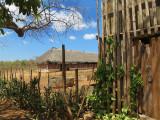 ranch cubain