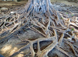 les racines qui courent
