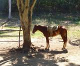 cheval à l'ombre
