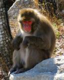Macaque en contrejour