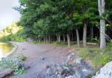 Les chênes de la plage Gagnon