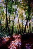 Sous bois au Mont-Tremblant