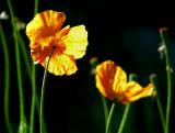 orange soleil couchant