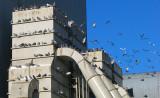 temple à pigeons