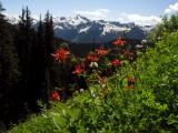 Flowers, peaks and snow