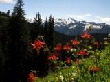 Flowers peaks and snow