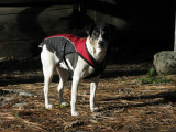 Kelly dog in camp