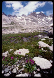 Titcomb Basin upper valley meadow flowers