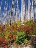 Forest renews after the fire