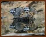 wildlife_reflections_2