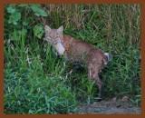 bobcat-teal 9-6-10-664b.jpg