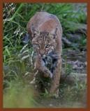 bobcat 9-6-10-710c1b.jpg