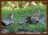 bobcats 8-31-09-4d541b.jpg
