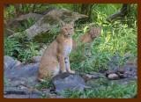 bobcats 8-31-09-4d551b.jpg