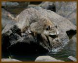 raccoon 8-10-12-780b.JPG