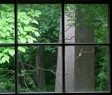Sqaure Tree Illusion