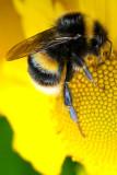 13th June 2011  bee
