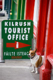 15th July 2011  Kilrush