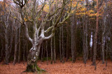 15th November 2011  woods