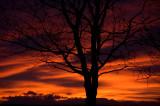 28th November 2011  red sky