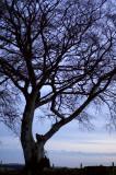 25th January 2008  favourite tree