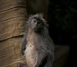 e BRX Zoo  feb 2012  GH2  ps cs5 RAW P1160618.jpg