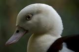 e BRX Zoo  feb 2012  GH2  pscs5 RAW  P1160674.jpg