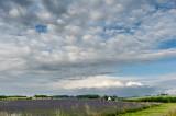 7th - Lavender's Blue...