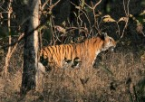 Pench Tiger Reserve - 15 march 2011