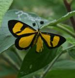 Moths Mexico