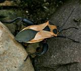 bug Mexico