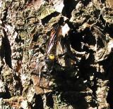 Wasp ?2