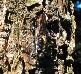 Wasp?