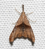 8397, Dark-spotted Palthus