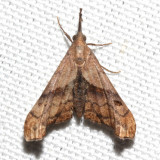 8398, Faint-spotted Palthus