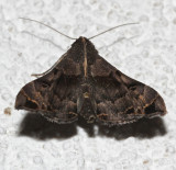 8398, Palthis asopialis, Faint-spotted Palthis