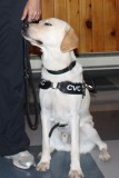 Dog Guides Canada Presentation 3
