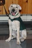 Dog Guides Canada Presentation 6