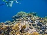 Cairns 2011