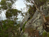 Mt Cooroora