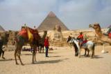 8878 Camel and Sphyinx.jpg