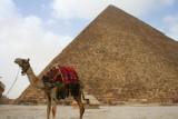 8911 Camel and Pyramid.jpg