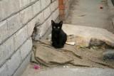 9012 Cute Kitten Cairo.jpg