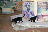 9197 Black cats in Sharm.jpg